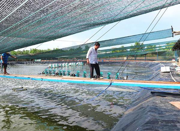 Lưới Che NẮng Vườn Kích Thước 1m x 100m