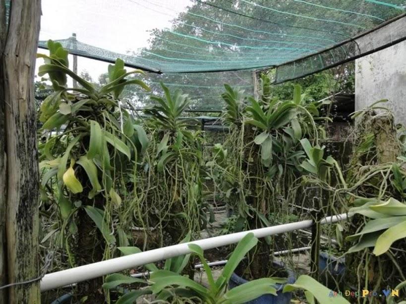 Lưới che nắng Thái Lan , che nắng vườn trồng lan 50 - 60 %